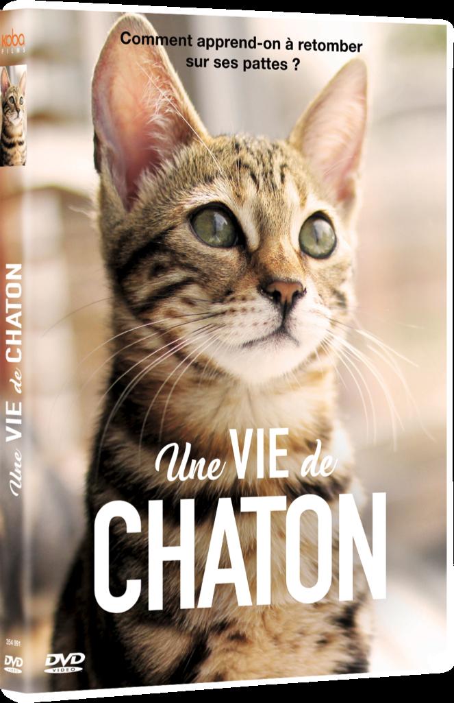 VIE DE CHATON (UNE)